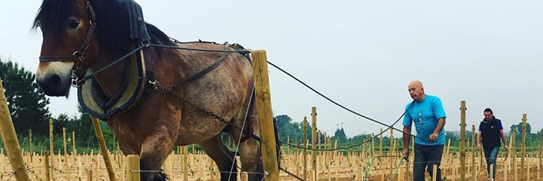 cheval_vigne_pedagogique